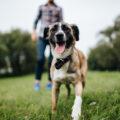 愛犬と飼い主が走っている様子